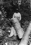 A black-and-white photograph of a figure holding a roll of birch bark on their back.