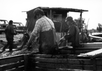 A photograph of fishermen seining off the side of a boat.
