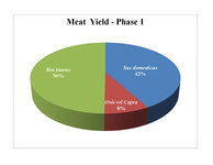 Proportions of meat yield in Phase B-1, suggesting that beef played the largest role in the local diet, followed by pork.