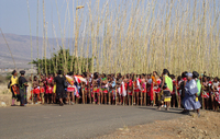 A photograph with hundreds of maidens lined up at the beginning of the Umkhosi womHlanga parade in front of the Enyokeni Royal Palace. They all are holding long reeds that extend high above their heads.