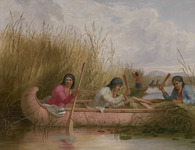 An oil painting of three figures collecting wild rice in a birch-bark canoe. Additional canoes and rice collectors are in the background.