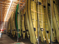 A color photograph of Kevlar canoes hanging in a warehouse.