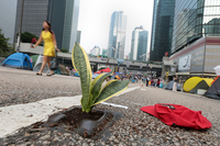 This is a close-up photo of a plant growing from a small patch of dirt placed in the street by an Occupy artist. Tents line either side of the street, and skyscrapers several blocks away are in the background