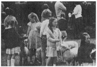 "Pet parade at the South Downs school. The event is held each year, and most of the pets are ""mismothered"" lambs (the mother having rejected the offspring) that are bottle-fed by members of the farm family; when the animals are old enough, they are returned to the flock."