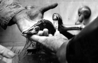 A black-and-white photograph of oil being cleaned off of a bird in a sink.