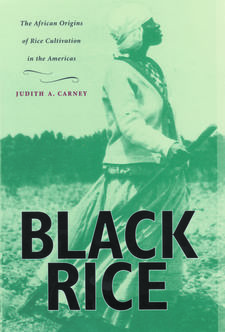 Cover image for Black rice: the African origins of rice cultivation in the Americas